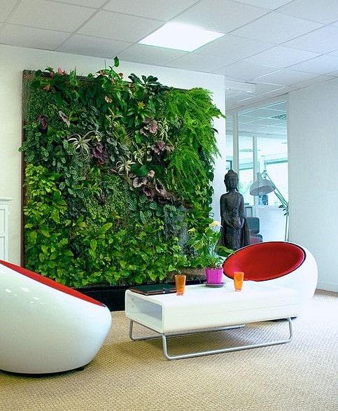 Quelles plantes pour décorer son bureau ?